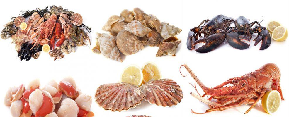 Cibo del mare cosa sono i non pesci sale pepe for Cucinare meduse