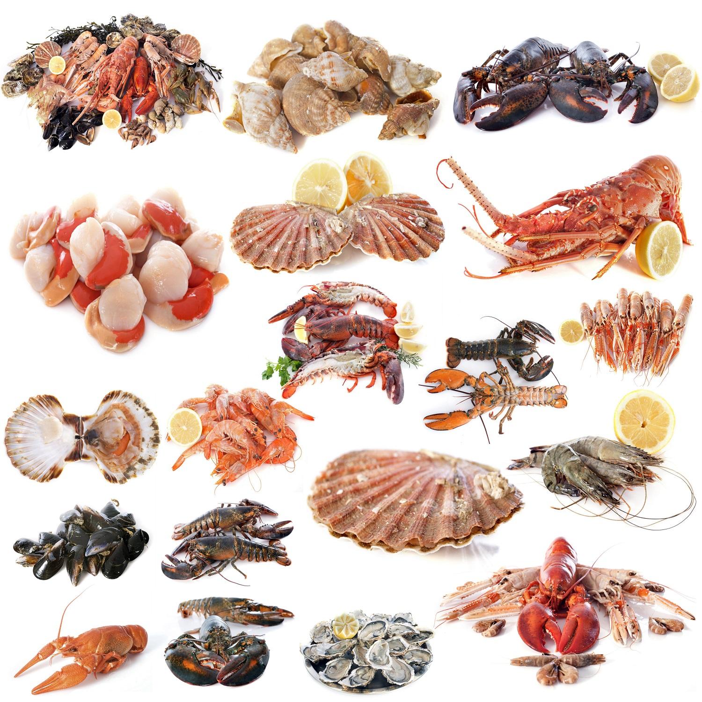 Cibo del mare cosa sono i non pesci sale pepe for Cibo per pesci tropicali