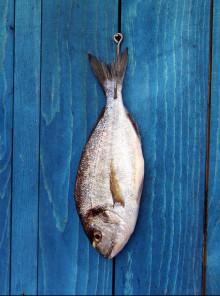 Non solo etichetta: tutti i trucchi per comprare il pesce