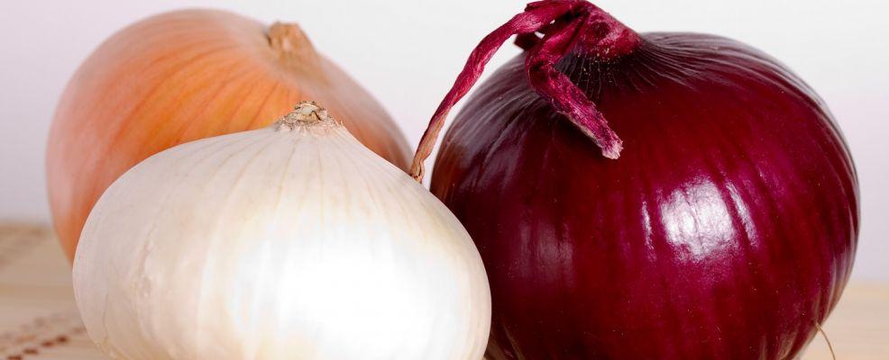cipolle 3 bionda bianca rossa