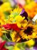 fiori-eduli