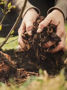 L'arte di innaffiare l'orto (soprattutto in periodo di siccità)