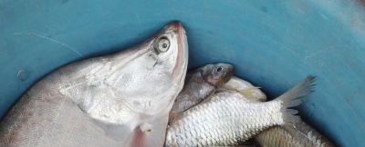 sito di incontri simile a un sacco di pesci sito Web di matchmaking iniziale