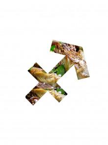STARS AND FOOD - SAGITTARIO - SETTIMANA DAL 10 AL 16 DICEMBRE