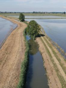 La sostenibile leggerezza del riso