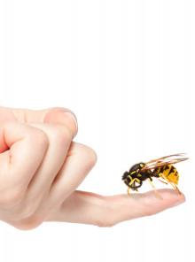 Aziende italiane: CONAPI, quando uomini & api si alleano