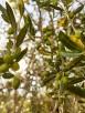 olio-extravergine-oliva-qualità