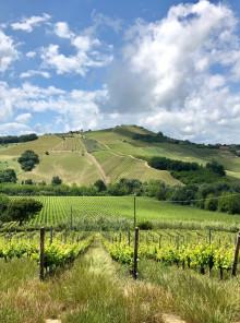 Abruzzo, dove nasce il Montepulciano. E non solo