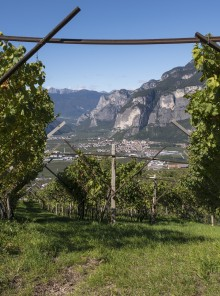 Trentino, terra di grappe
