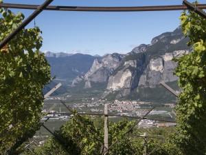 Paesaggio del Trentino e i suoi vitigni