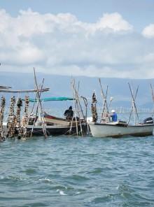 Le ostriche del basso Adriatico, tra pesca e allevamento